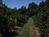 blackberry-field-2-060310